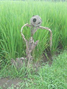 scarecrow Bali